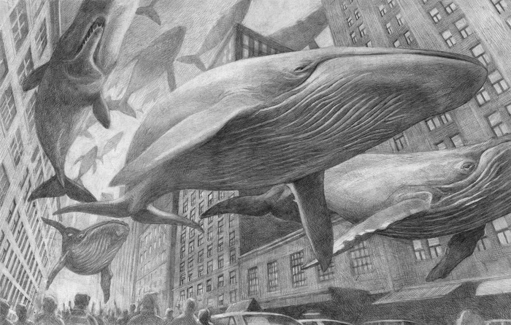 davide calì balene